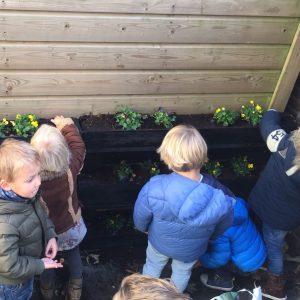 verticaal tuinieren| buitenspeelruimte| buitenactiviteit