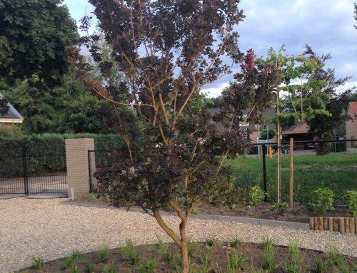 Staan de juiste bomen en heesters al in je tuin?